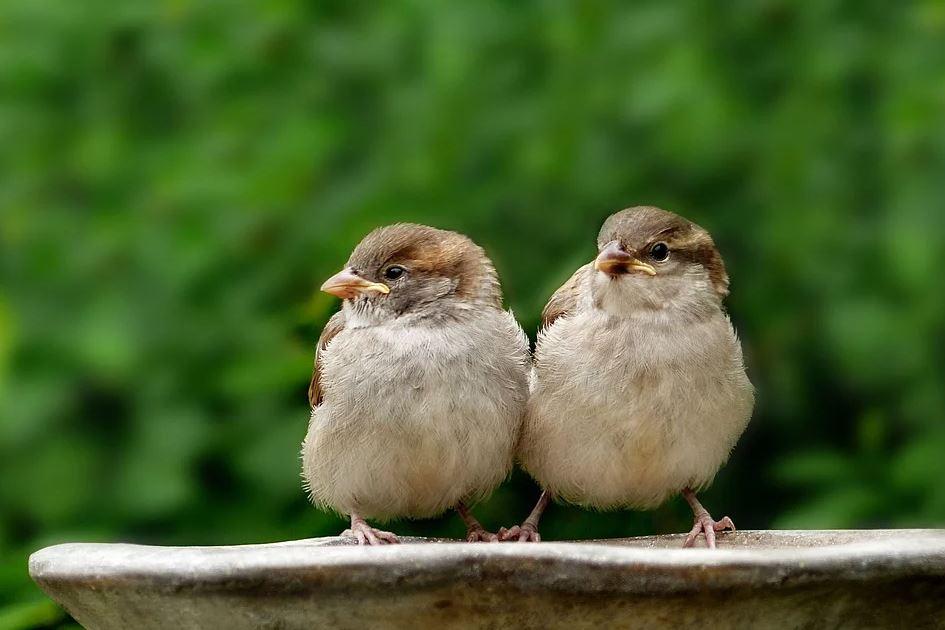 dva ptáčci vedle sebe